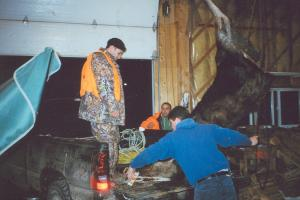 The moose is carefully being lifted off the truck to be hung in the air. It is important not to be rough with the animal as it m