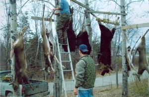 Hunting takes a lot of skill and hard work. These men have enough meat to feed their entire community for the winter.