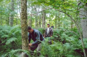 Les arbres de frêne poussent loin dans la forêt.