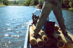 These ash logs are being transported back from the bush in a boat. They were not accessible through roads so a boat was needed.
