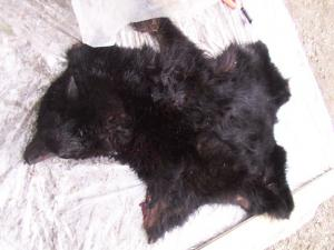Bear fur and tanned hide could be made into mitts, hats, and mukluks (boots). The fur is very warm and can be used for blankets.