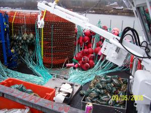 You need a lot of gear to go out fishing for snow crab. You need the special traps, buoys, meters of line and lots of bait.
