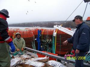 The fishermen use frozen mackerel to bait the crabs into the traps. The mackerel are placed in bags and the bags are put in the