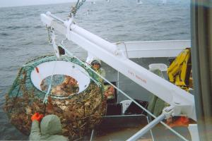When the traps are loaded with crab they are extemely heavy and strong machinery is required to lift the traps out of the water