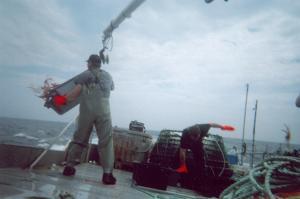 Le triage est maintenant terminé, les pêcheurs doivent maintenant nettoyer le pont.