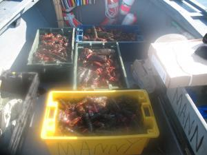 These crates contain the lobster catch of the day.