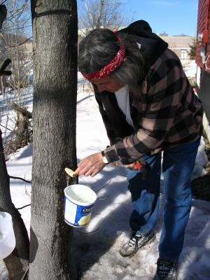 The sap is pouring into the bucket. The bucket is almost full.