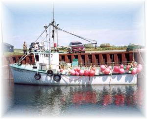 Some fishing boats are multi-species, like this one, which is used to fish for crab and turbo.