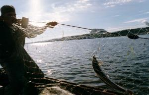 As the men are checking their nets, you can clearly see that they caught a salmon.