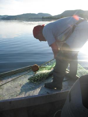 The salmon is being detangled from the net.