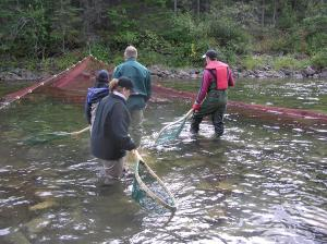 The fishing net is so long that it's used as a V shape in the water to trap the salmon. The fishermen then use hand held nets to