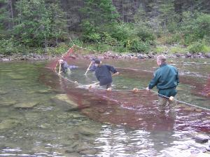 The big nets don't always catch passing salmon which is why these fishermen have to go into the river and catch them using their