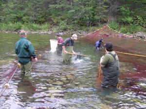 Ces homes et femmes cherche pour du saumon qu'ils pourront capturer dans leur filet à main.