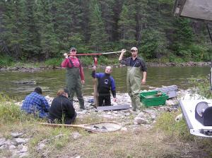 Pour peser les saumons ils sont pesés sur une balance qui les pend pour donner leur poids.