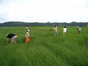 It is very common to see families gathered together to help havest sweet grass.