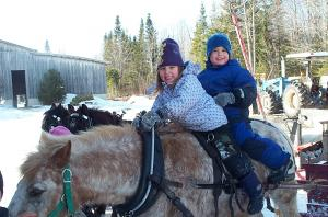 Long before cars and skidoos, the Mi'gmaq used horses and sleighs to get around in the winter.
