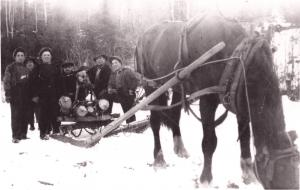 Back in the old days, the men would cut down the trees and carry them onto a sled where a horse would haul them away.