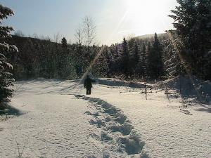 Snow shoes are great to use when rabbit snaring, they allow you to travel deep into the woods to set snares.